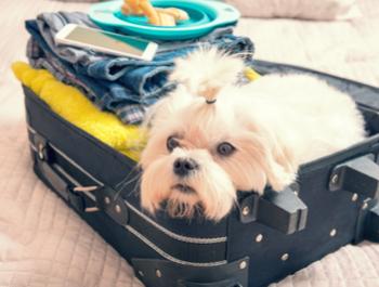 Патувате со домашно милениче?